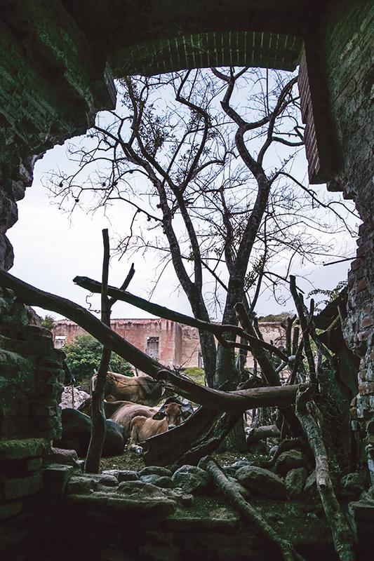 Muros agrietados forman parte de viviendas y rediles para el ganado.