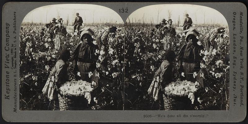 Trabajadores en una plantación de algodón, Flickr